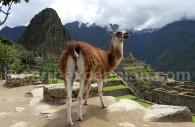 Cité inca de Machu Picchu