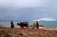 Paysages du lac Titicaca