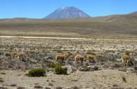 Salinas y Aguada Blanca – Cédits Licence cc