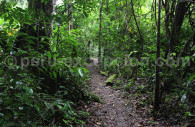 Randonnée dans la Réserve nationale Tambopata