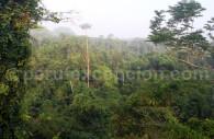 La forêt amazonienne du Pérou