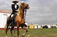 Cheval de paso peruano