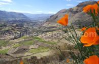 Cultures en étage du Canyon de Colca