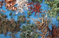 Epices et condiments du Pérou