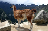 Gardien du Machu Picchu