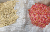 Graines du Pérou