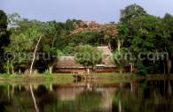 Parc national du Manu