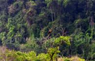 Toucan, Réserve nationale de Pacaya Samiria