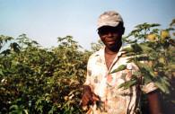 Récolte du coton à El Carmen