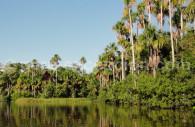 Réserve nationale de Tambopata-Candamo