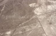 La Fleur de Nazca