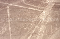 Le Perroquet de Nazca