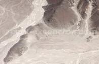 Le Canard de Nazca