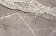 La Baleine de Nazca