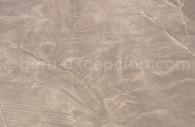 Le Singe de Nazca