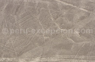 Oiseau Frégate de Nazca