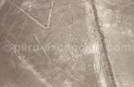 L'Araignée de Nazca
