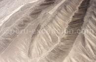 Oiseau Kosok, Palpa, vue générale