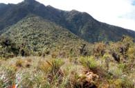 Pampa Quebrada, Parc de Yanachaga