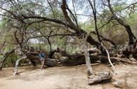 Sanctuaire Historique Bosque de Pómac