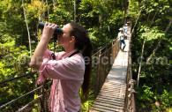 Observation de la forêt amazonienne