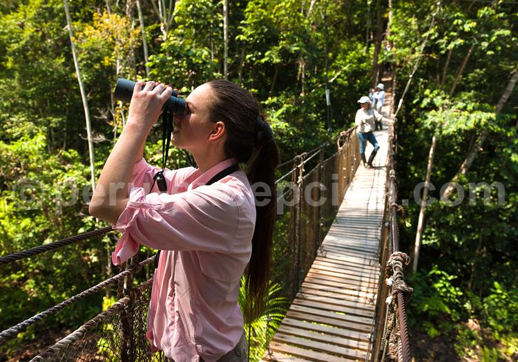 Observation de la for t amazonienne - La foret fouesnant office de tourisme ...