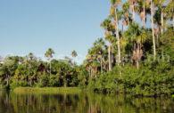 Réserve de Tambopata