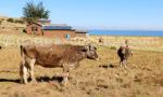 Péninsule de Luquina, Lac Titicaca