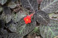 Flore du Pérou