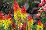 Couleurs flamboyantes, flore du Pérou