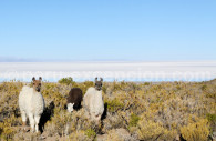 Les gardiens d'Uyuni