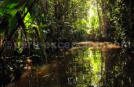 Jungle de Tarapoto