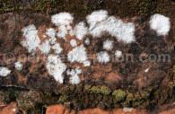 Pierre recouverte de lichens