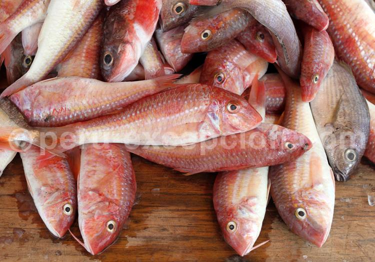 Rougets, marché de Puerto Pizarro
