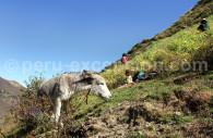 Route de Huaraz à Sechín