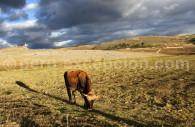 Scène rurale à Cajamarca