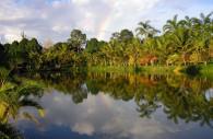 Palmiers de Tarapoto, Licence CC
