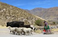 Agence de voyage spécialisée à Lima