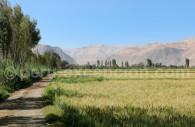 Paysage autour de Toro Muerto