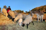 Séjour personnalisé au Pérou