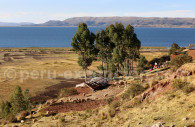 Péninsule Chicuito, Lac Titicaca