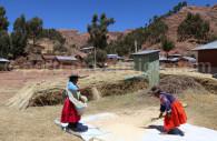 Récolte du Quinoa, Jachapataza