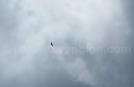Condor des Andes, Pérou
