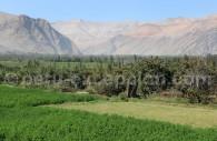 Valle de Majes, oasis au milieu du désert