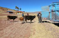 Agriculture, Peninsula Chicuito