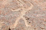 Roches volcaniques de Toro Muerto