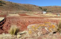 Champs au bord du Titicaca