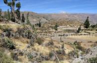 Colca, Terre agricole