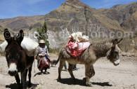 Zone rurale de Colca, Pérou
