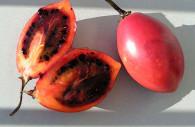 Tomate de Arbol, Solanum betaceum cc wikipedia